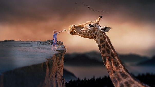 jongen voert giraffe